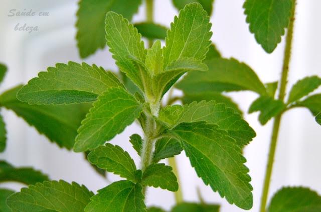 Benefícios da stevia