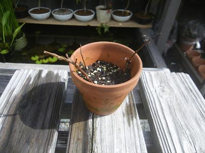 さし芽・種まきの土