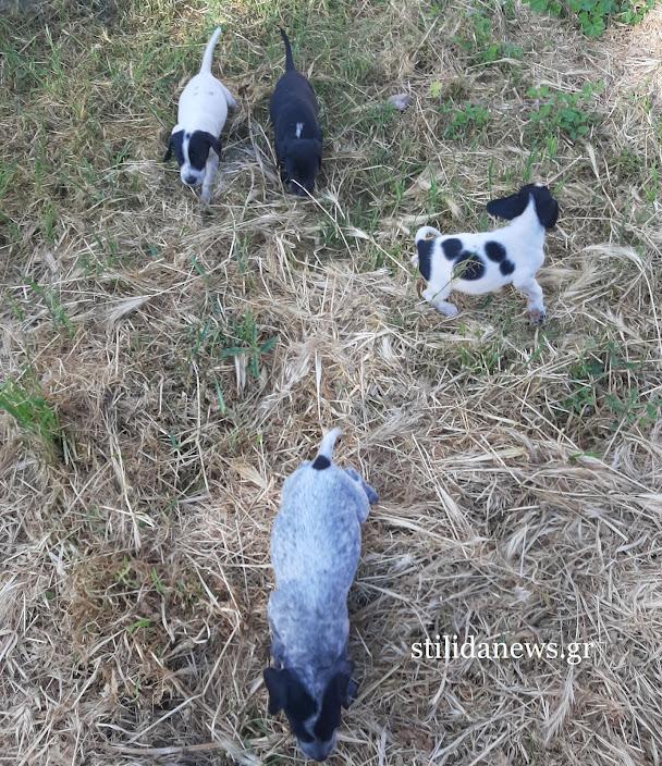 Στυλίδα: Σκυλάκια στο πάρκο του ΟΣΕ