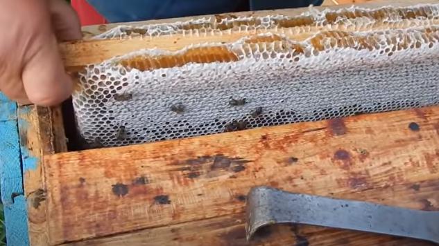 Πως μαζεύουν τόσο μέλι;