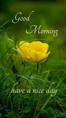 good morning nature rain images