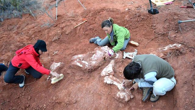 """В Аргентині знайшли скелет """"першого динозавра-гіганта"""""""