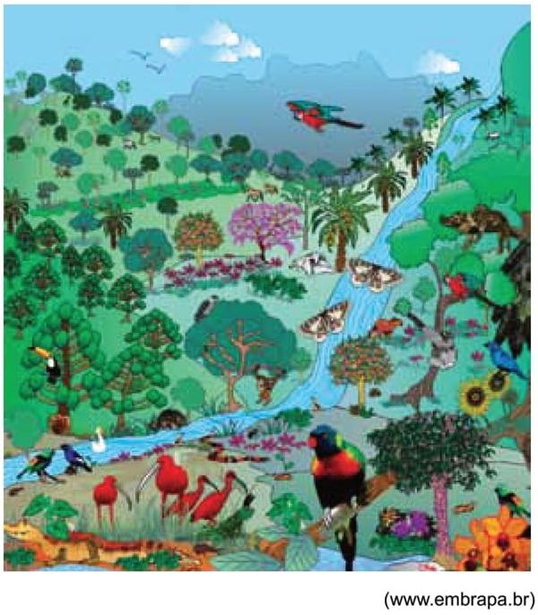 O bioma ilustrado na imagem corresponde
