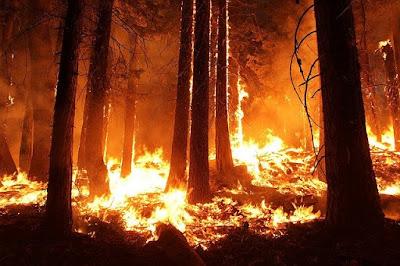 kebakaran hutan dan perubahan iklim