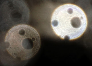 orb with four holes