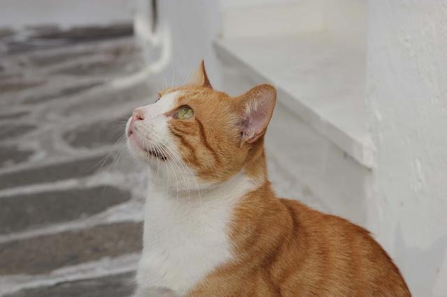 les chats de paros vous les trouverez partout