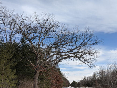 winter branches against blue sky