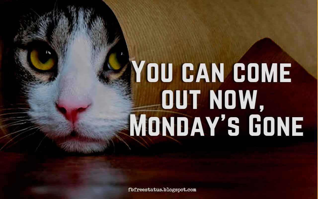 You can come out now, Monday's Gone.