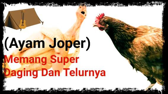 Ayam Jowo Super
