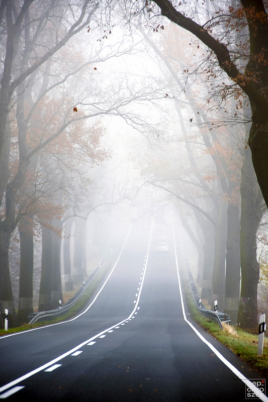 Beautiful Foggy Road  A1 Pictures