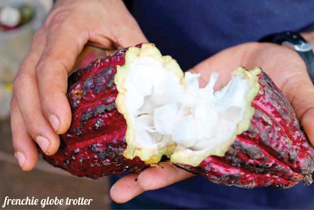 An opened cocoa pod, Munnar - Kerala
