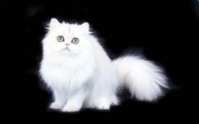 Iphone Wallpaper Cute Cat Images