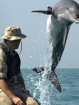 Lumba-lumba Perang