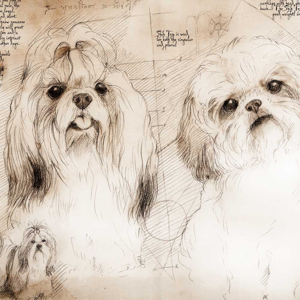 04-Shih-Tzu-Study-Leonardo-s-Dogs-Cats-and-Dogs-Drawn-in-the-style-of-Leonardo-da-Vinci