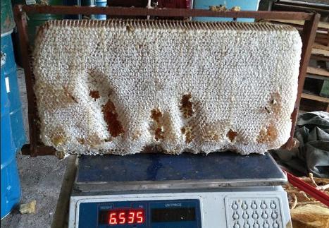 Το μέλι του πεύκου είναι διπλό