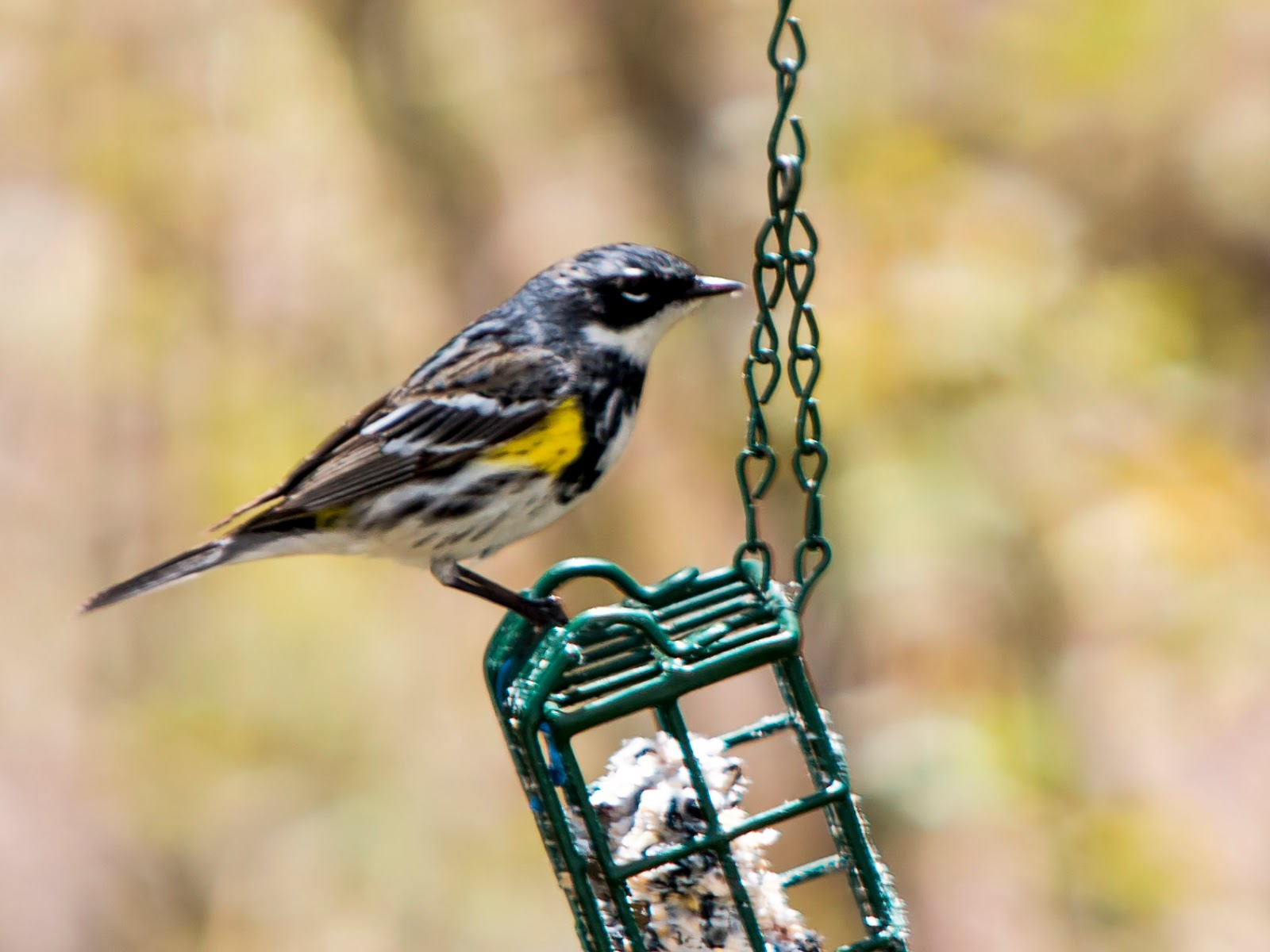 bit finch select from bird best fill stokes little eating your and for finches yellow with eight black feeder these yard the feeders