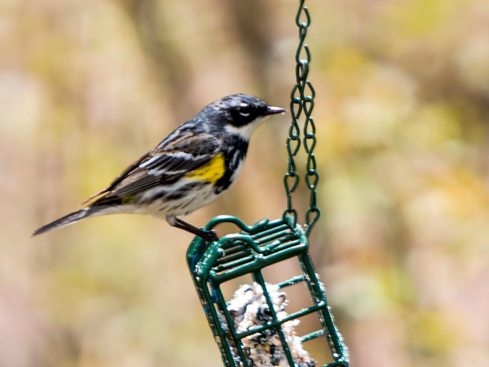 always hummingbird on bright is yellow even feeders summer wonders in feeder my arizona pin the bird this