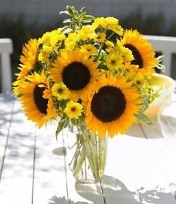 Gambar Bunga Matahari Cantik 3