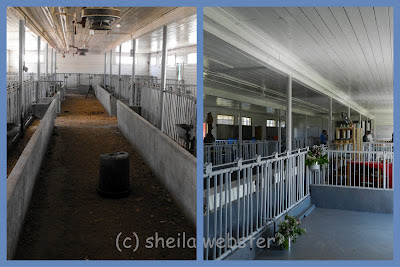 The photo shows the work done inside the calf barn for the Market