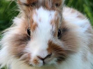 Why the bunny rabbit has wiggly slits for a nose
