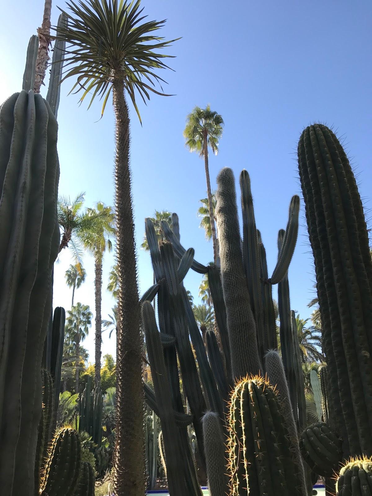 Schmerzwach Jardin Majorelle Ein Kleinod In Marrakesch