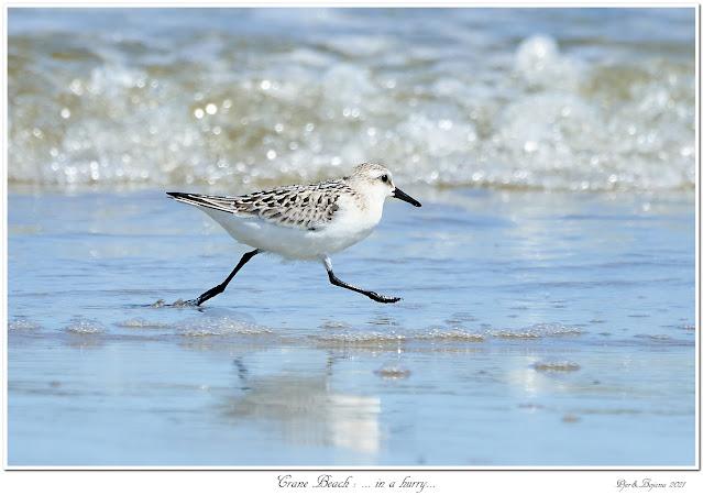 Crane Beach: ... in a hurry...