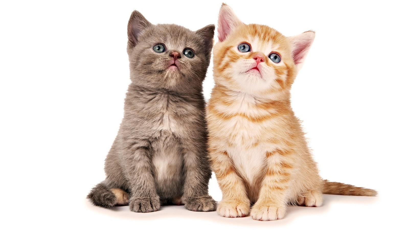 Cat Wallpapers for Phone