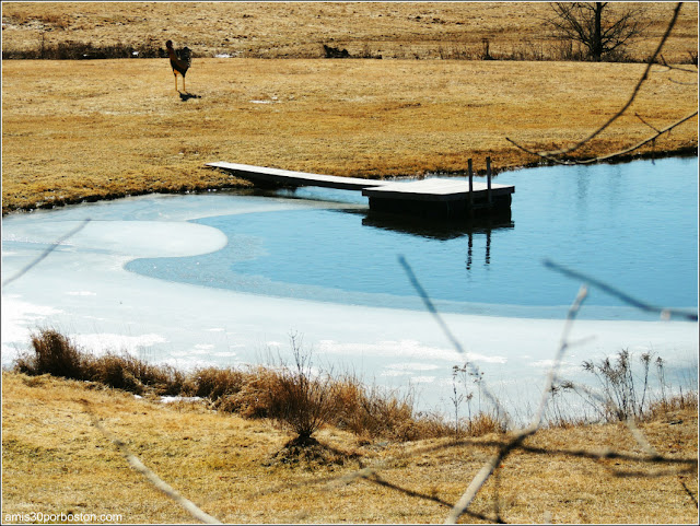 Camino granjas sirope de arce