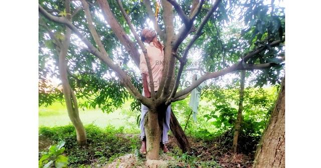 सरिसब गांव के बछराजा नदी के पास पेड़ से लटका मिला बुजुर्ग का शव, अभी तक नहीं हुई पहचान