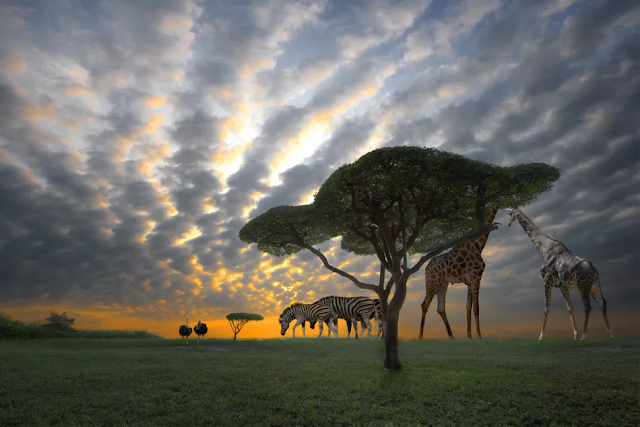Plan Your Trip to Africa in 10 Easy Steps