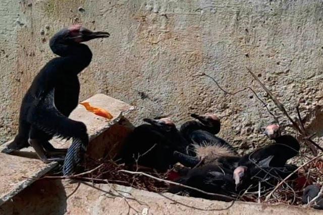 पेड़ कटने के 2 दिन बाद तक टूटे अंडों के पास बैठे रहे पक्षी - newsonfloor.com