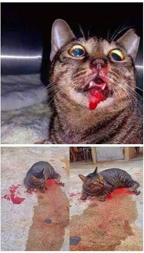 Kucing Haiwan Kesayangan Nabi
