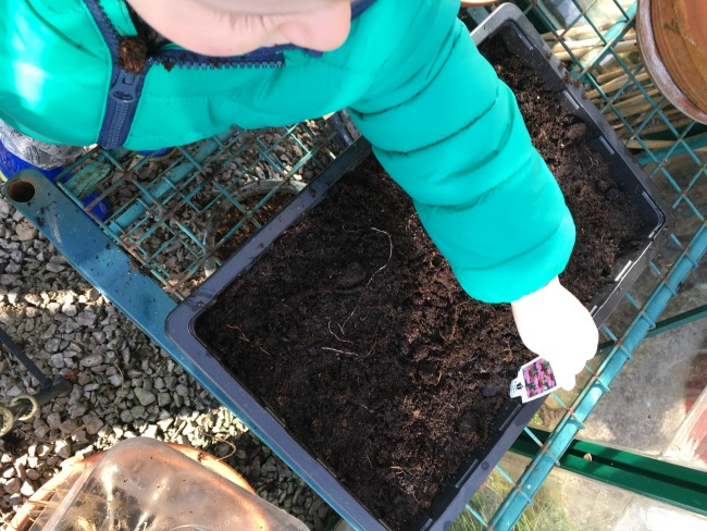How-to-Sow-Seeds-for-Absolute-Beginners-image-of-toddler-placing-label-into-seed-tray