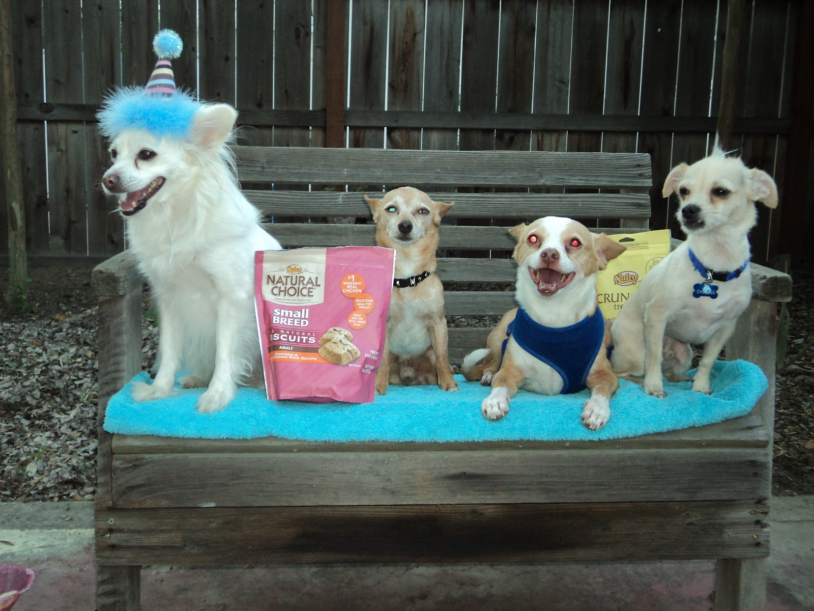 We attended a doggie party hosted by our friends at Sew Doggy Style, click  on the link to see more pics and their blog.