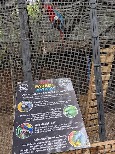 Kirkleatham Owl Centre Review  - parrot