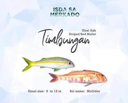 Isda Timbungan (Goat Fish / Striped Red Mullet)