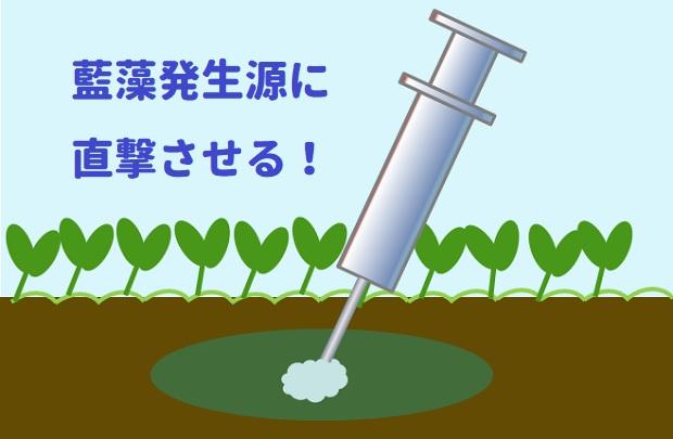 藍藻 木酢液