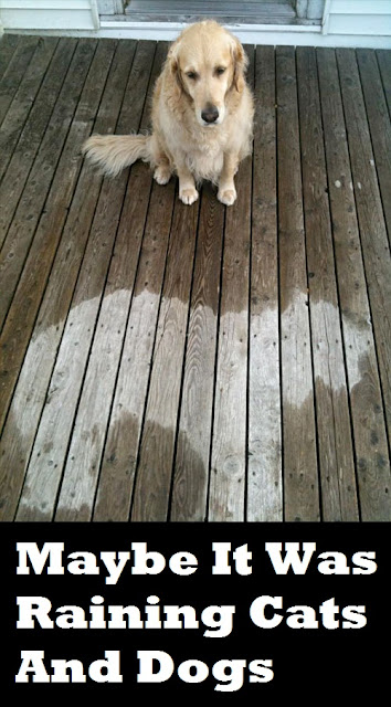 A dog has slept in the rain and left a dry mark in his own shape