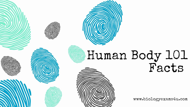What are the systems of the human body? 11 Human Body Systems and Functions | Human Body 101