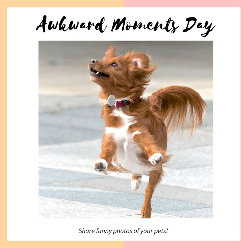 Awkward Moments Day Wishes for Instagram