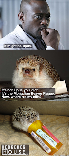 hedgehog house, hedgehog house md, it might be lupus, its not lupus you idiot, its the mongolian beaver plague now where are my pills, house md