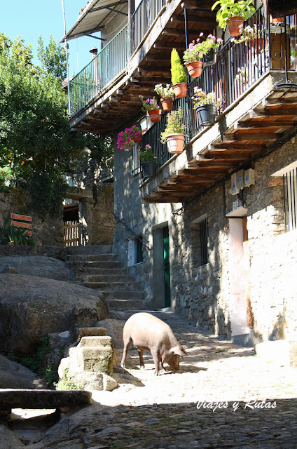 El cerdo Antón de La Alberca