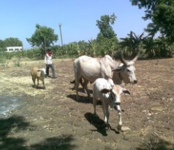 agriculture ministry of india details 2020