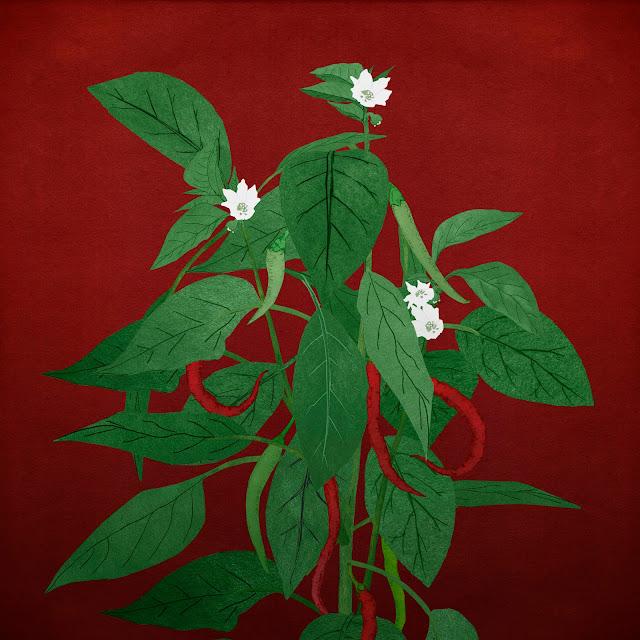 guindillas, chile, planta, flor
