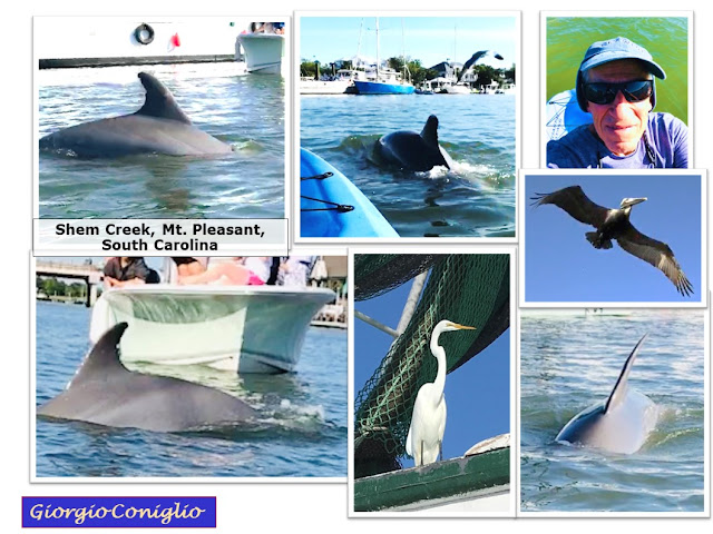 notes about kayak excursions; dolphin; waterfowl; Mt. Pleasant; South Carolina; Giorgio Coniglio
