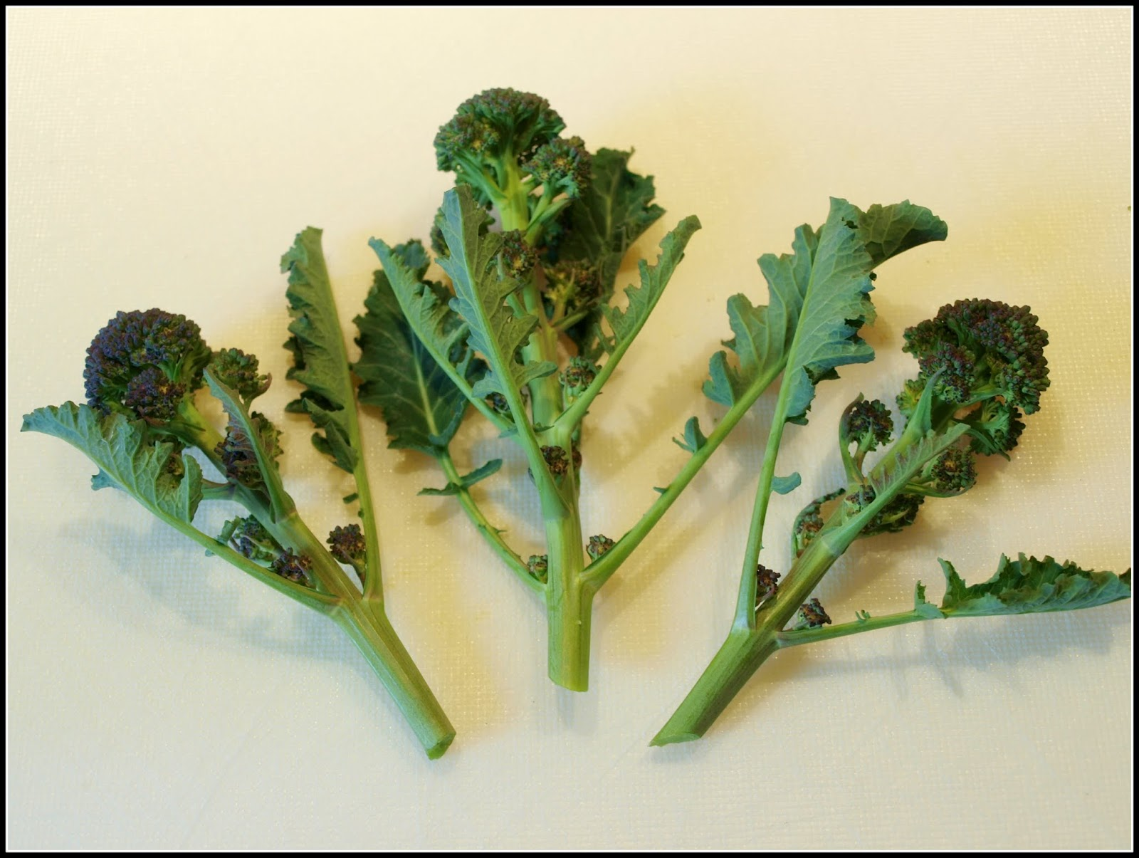 Marks veg plot harvesting purple sprouting broccoli this beautiful and tasty vegetable needs very careful cooking i usually boil my broccoli in a large pan of water and have a colander handy for draining mightylinksfo