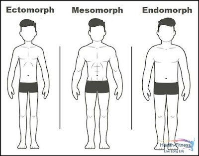 Different Types Of Male Body