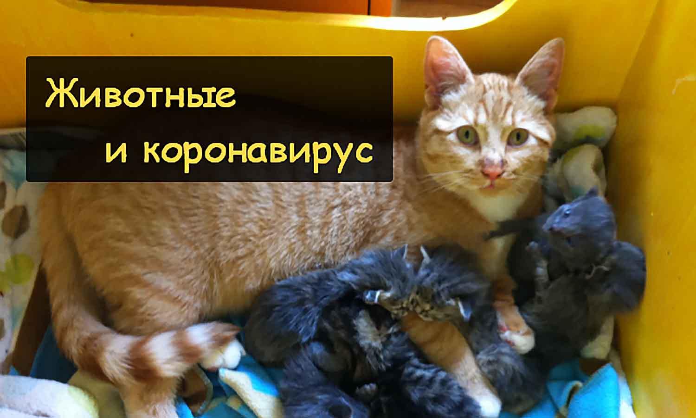 Коронавирус и домашние животные