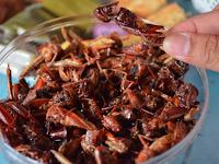 Serangga, Alternatif Sumber Protein Hewani Masa Depan