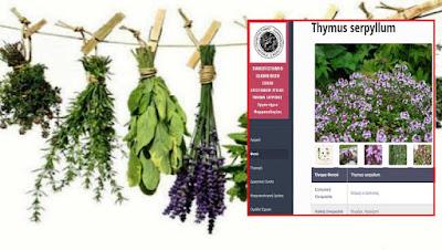 Τα Φαρμακευτικά Φυτά της Ηπείρου (Βάση δεδομένων απο το Πανεπιστήμιο Ιωαννίνων)